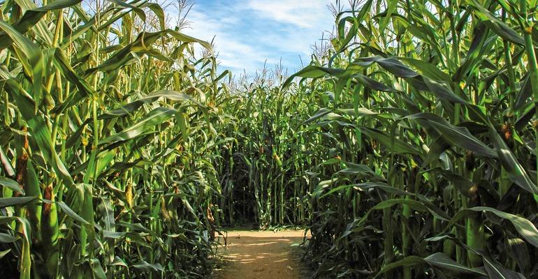 Lantaarntocht maisdoolhof voor echte speurneuzen