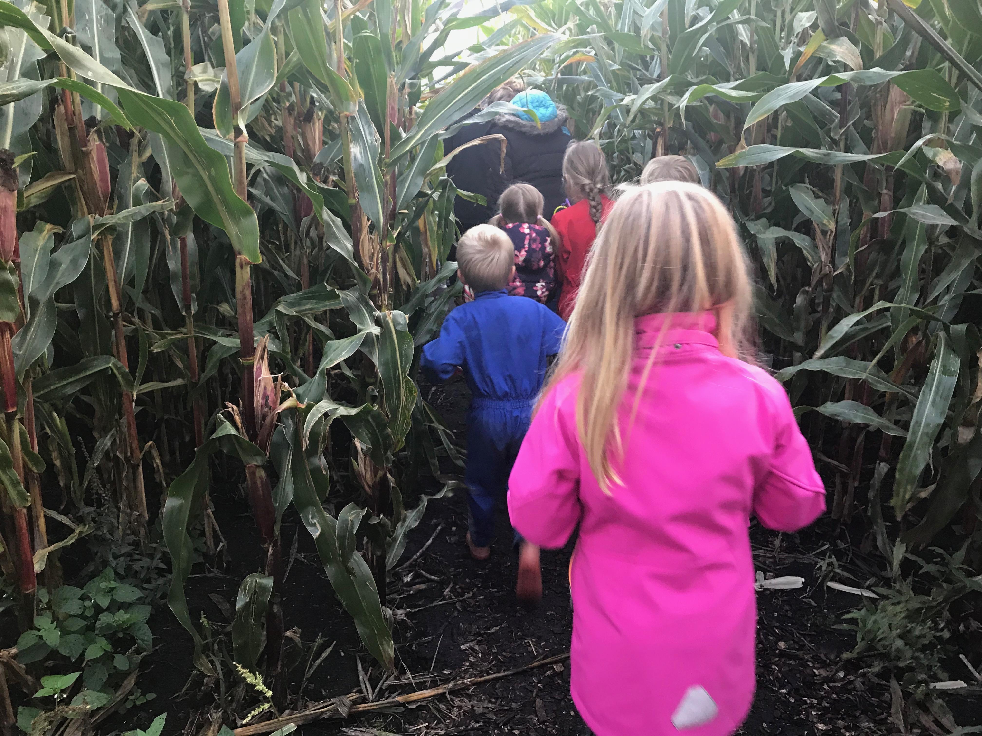 Lantaarntocht als afsluiting succesvol maisdoolhofseizoen 2019