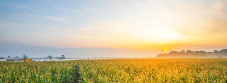 Maisdoolhof Meerstad gaat niet open in 2021